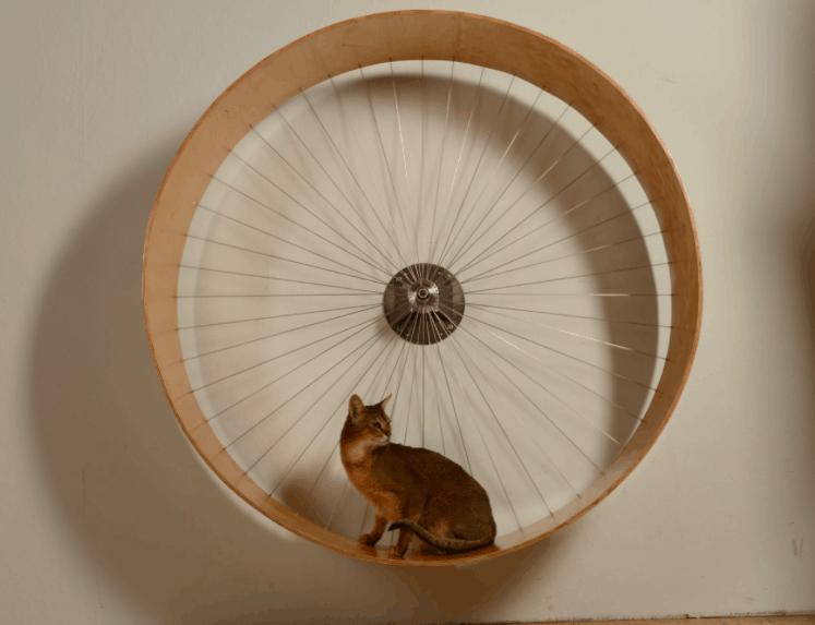 Holin design cat's wheel