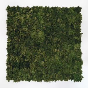 muur met mos moswand