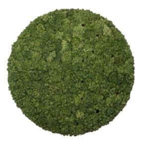 moswand cirkel met stalen lijst binnen detail